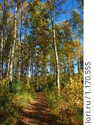 Купить «Осенний лес», эксклюзивное фото № 1170555, снято 7 октября 2009 г. (c) lana1501 / Фотобанк Лори