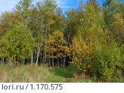 Купить «Осенний лес», эксклюзивное фото № 1170575, снято 11 октября 2009 г. (c) lana1501 / Фотобанк Лори