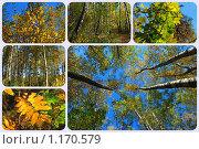 Купить «Осенний лес», эксклюзивное фото № 1170579, снято 7 октября 2009 г. (c) lana1501 / Фотобанк Лори