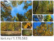 Купить «Осенний лес», эксклюзивное фото № 1170583, снято 7 октября 2009 г. (c) lana1501 / Фотобанк Лори