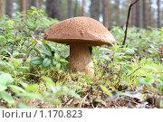 Купить «Белый гриб», фото № 1170823, снято 3 сентября 2009 г. (c) Владислав Иванцов / Фотобанк Лори