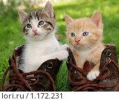 Купить «Котята в ботинках», фото № 1172231, снято 20 августа 2009 г. (c) Дмитрий Калиновский / Фотобанк Лори