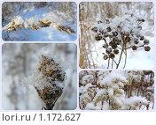 Купить «Зима», эксклюзивное фото № 1172627, снято 4 января 2009 г. (c) lana1501 / Фотобанк Лори