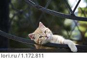 Кот. Стоковое фото, фотограф Юля Волкова / Фотобанк Лори
