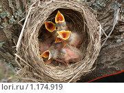 Новые жизни ... Стоковое фото, фотограф Виталий Кожин / Фотобанк Лори