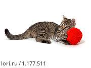 Купить «Котенок с красным клубком», фото № 1177511, снято 17 октября 2009 г. (c) Светлана Чуйкова / Фотобанк Лори