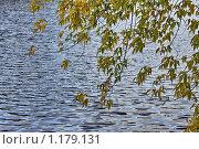 Купить «Осенняя ветка», фото № 1179131, снято 10 октября 2009 г. (c) Яременко Екатерина / Фотобанк Лори