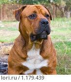 Купить «Портрет собаки», фото № 1179439, снято 4 октября 2009 г. (c) Олег Хархан / Фотобанк Лори