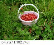 Купить «Лесная земляника», фото № 1182743, снято 13 июня 2009 г. (c) Качанов Владимир / Фотобанк Лори