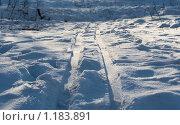 Купить «Лыжня», фото № 1183891, снято 4 марта 2009 г. (c) Вячеслав Рящиков / Фотобанк Лори