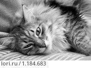 Купить «Кот», фото № 1184683, снято 31 октября 2009 г. (c) Stepanuk Valera / Фотобанк Лори