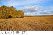 Купить «Русское поле после жатвы», фото № 1184871, снято 3 октября 2009 г. (c) Григорий Погребняк / Фотобанк Лори
