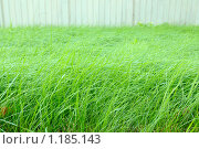 Купить «Трава у забора с капельками воды», фото № 1185143, снято 11 сентября 2009 г. (c) Vladimir Kolobov / Фотобанк Лори