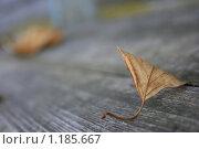 Желтый лист на деревянной скамейке. Стоковое фото, фотограф Лютоев Игорь / Фотобанк Лори