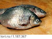 Купить «Речная рыба карась на разделочной доске», фото № 1187367, снято 23 октября 2009 г. (c) ElenArt / Фотобанк Лори