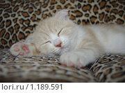 Купить «Спит котенок», фото № 1189591, снято 26 июля 2009 г. (c) Андрей Дегтярев / Фотобанк Лори