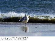 Чайка. Стоковое фото, фотограф Дмитрий Малахов / Фотобанк Лори