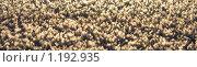 Купить «Поверхность, покрытая снегом, малая глубина резкости», фото № 1192935, снято 8 января 2009 г. (c) Полина Столбушинская / Фотобанк Лори