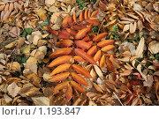 Осенние листья. Стоковое фото, фотограф Наталья Хваткова / Фотобанк Лори