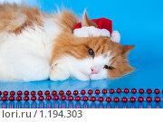 Купить «Новогодний кот», эксклюзивное фото № 1194303, снято 5 ноября 2009 г. (c) Juliya Shumskaya / Blue Bear Studio / Фотобанк Лори