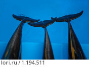 Три хвоста дельфина. Стоковое фото, фотограф Екатерина Будник / Фотобанк Лори