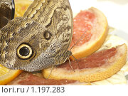 Купить «Обед», фото № 1197283, снято 5 июня 2008 г. (c) Павел Подолянко / Фотобанк Лори