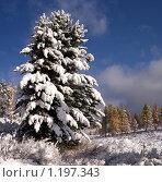 Купить «Зимняя сказка», фото № 1197343, снято 18 сентября 2009 г. (c) Николай Михальченко / Фотобанк Лори