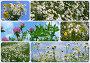 Луговые и полевые цветы, эксклюзивное фото № 1198467, снято 22 января 2017 г. (c) lana1501 / Фотобанк Лори