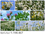Купить «Луговые и полевые цветы», эксклюзивное фото № 1198467, снято 19 июля 2019 г. (c) lana1501 / Фотобанк Лори