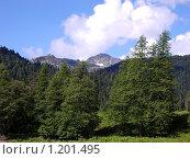 Лес в горах. Стоковое фото, фотограф Владимир Стефанов / Фотобанк Лори