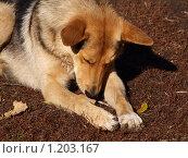 Пес беспородный, лежащий на земле. Стоковое фото, фотограф Ваганова Марина / Фотобанк Лори