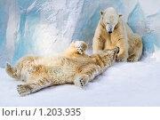 Купить «Пара белых медведей в зоопарке», фото № 1203935, снято 7 февраля 2009 г. (c) Петр Кириллов / Фотобанк Лори