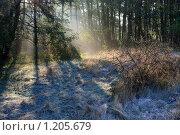 Восход солнца в лесу. Стоковое фото, фотограф Анатолий Долгополов / Фотобанк Лори