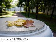 Осенние листья в парке, крупный план. Стоковое фото, фотограф Асадчева Марина / Фотобанк Лори