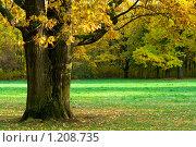 Купить «Бабье лето», фото № 1208735, снято 10 октября 2009 г. (c) Елена Калинина / Фотобанк Лори