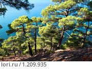 Купить «Сосны на фоне моря», фото № 1209935, снято 8 ноября 2009 г. (c) Игорь Архипов / Фотобанк Лори