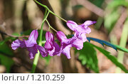 Купить «Весенние цветы», фото № 1210259, снято 18 апреля 2009 г. (c) Юрий Брыкайло / Фотобанк Лори