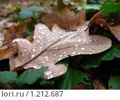 Осенний лист. Стоковое фото, фотограф Александр Быков / Фотобанк Лори