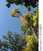 Осенние деревья. Стоковое фото, фотограф Евгений Заржицкий / Фотобанк Лори