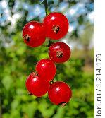 Кисть красной смородины. Стоковое фото, фотограф Дарья Суворова / Фотобанк Лори