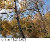 Пруд в Ясной Поляне осенью. Стоковое фото, фотограф Екатерина Петрова / Фотобанк Лори
