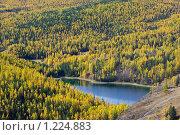 Купить «Осенний лес», фото № 1224883, снято 20 июля 2018 г. (c) Николай Михальченко / Фотобанк Лори