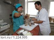 Купить «Ветеринары в операционной за работой», фото № 1224995, снято 8 июля 2009 г. (c) Галина Бурцева / Фотобанк Лори