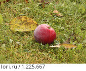 Яблоко в траве. Стоковое фото, фотограф Тучкина Любовь Владимировна / Фотобанк Лори