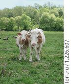 Купить «Дочки-матери», фото № 1226607, снято 11 мая 2008 г. (c) Анастасия Некрасова / Фотобанк Лори