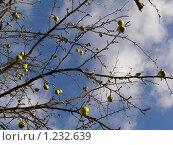 Зимние яблоки. Стоковое фото, фотограф Наталья Камайкина / Фотобанк Лори