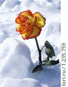 Роза. Стоковое фото, фотограф Никитина Жанна / Фотобанк Лори