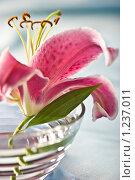 Купить «Лилия, романтическое настроение», фото № 1237011, снято 3 августа 2005 г. (c) Кравецкий Геннадий / Фотобанк Лори