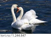 Купить «Валентинка», фото № 1244847, снято 4 августа 2009 г. (c) Маргарита Герм / Фотобанк Лори