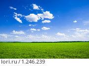 Купить «Поле, русское поле...», фото № 1246239, снято 7 июня 2009 г. (c) Виталий Романович / Фотобанк Лори